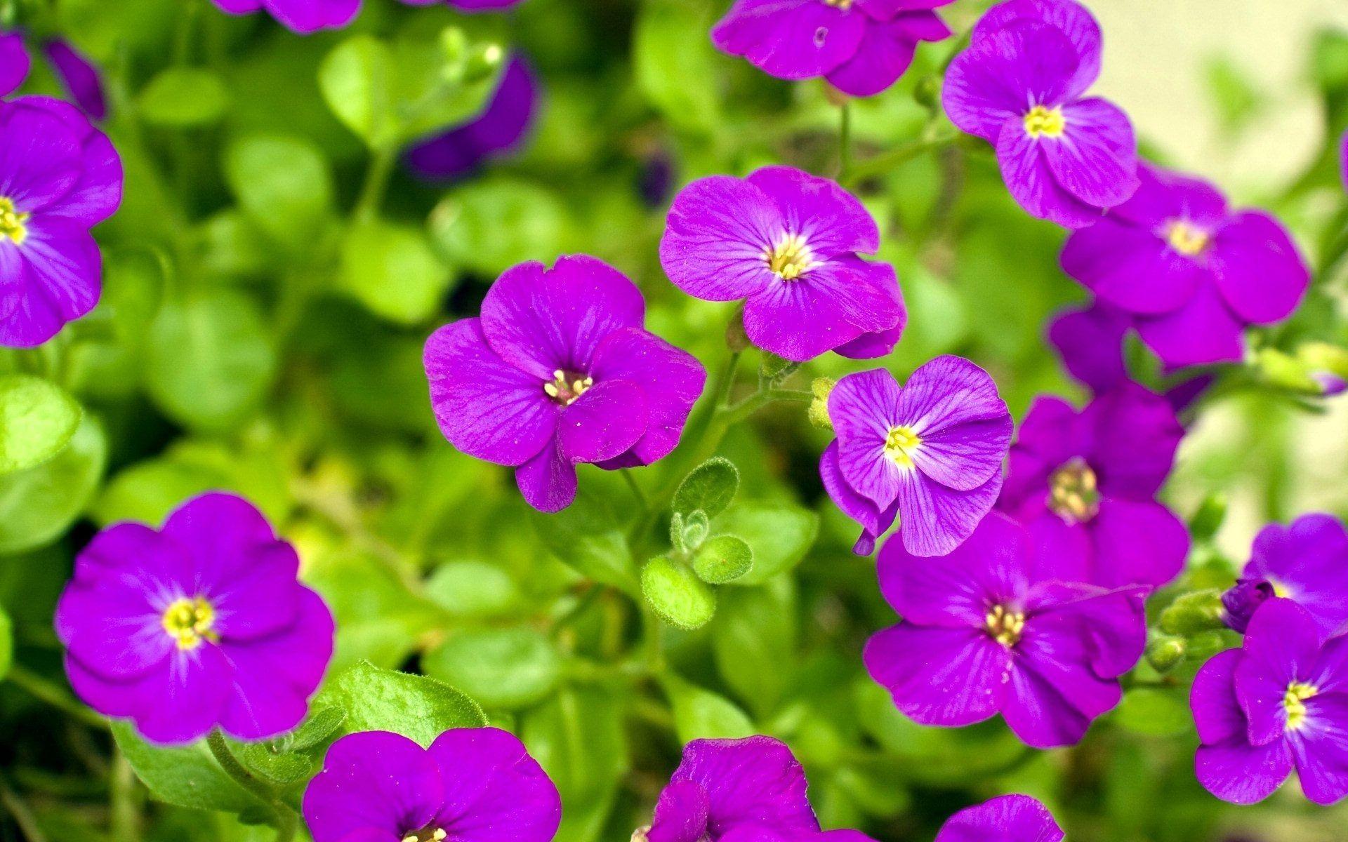 Best wallpaper hd 1080p free download 1366768 flower fleurs best wallpaper hd 1080p free download 1366768 flower dhlflorist Images
