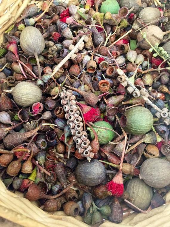 Natural Dried Gum nuts, bulk gumnut mixture, eucalyptus