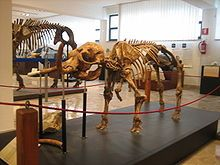 Museo di Paleontologia Gemmellaro: https://it.wikipedia.org/wiki/Museo_di_paleontologia_e_geologia_Gaetano_Giorgio_Gemmellaro