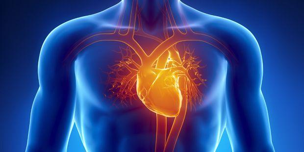 Eine Grafik des menschlichen Herzens