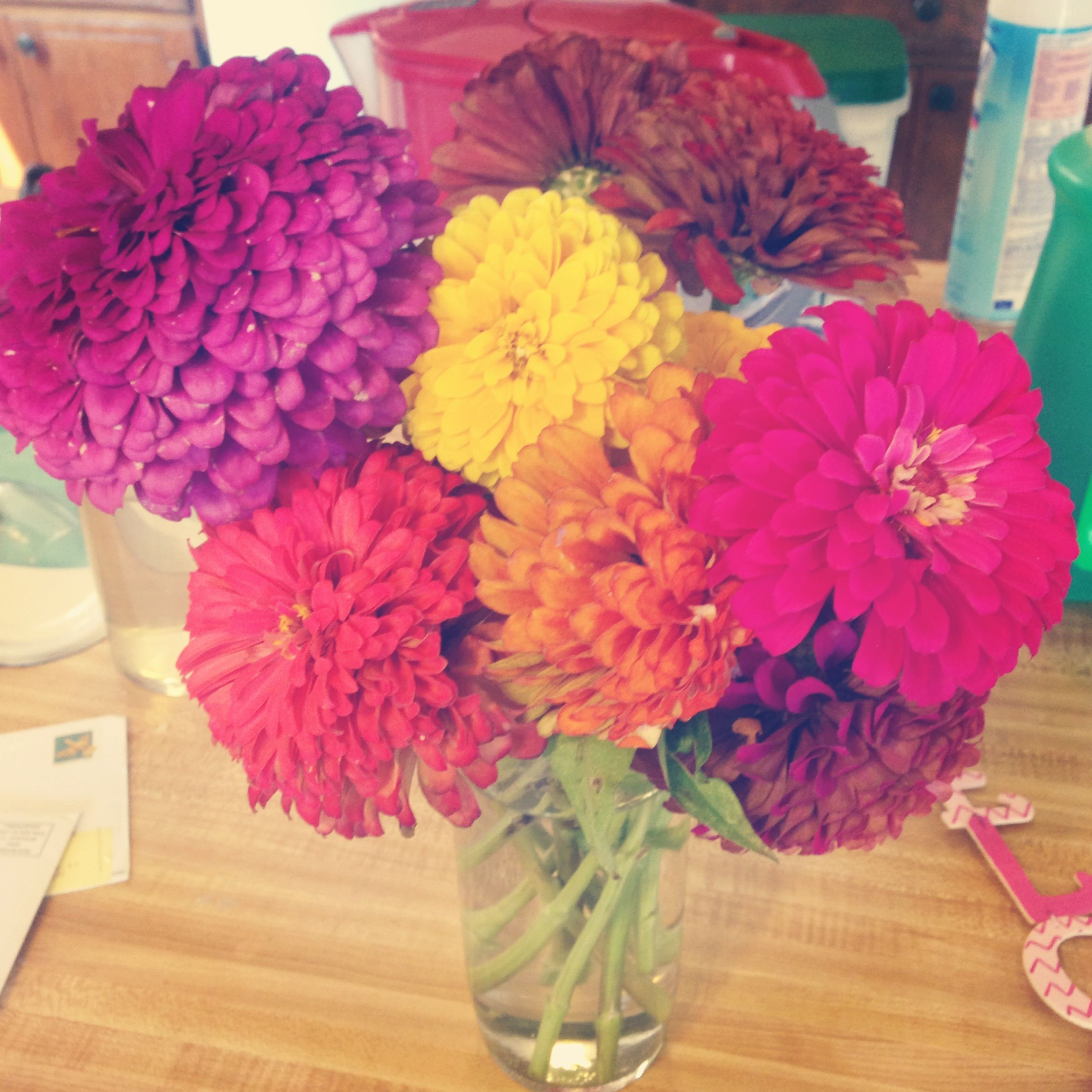 Beautiful Flowers From My Boyfriend 3 Petals And All Pinterest