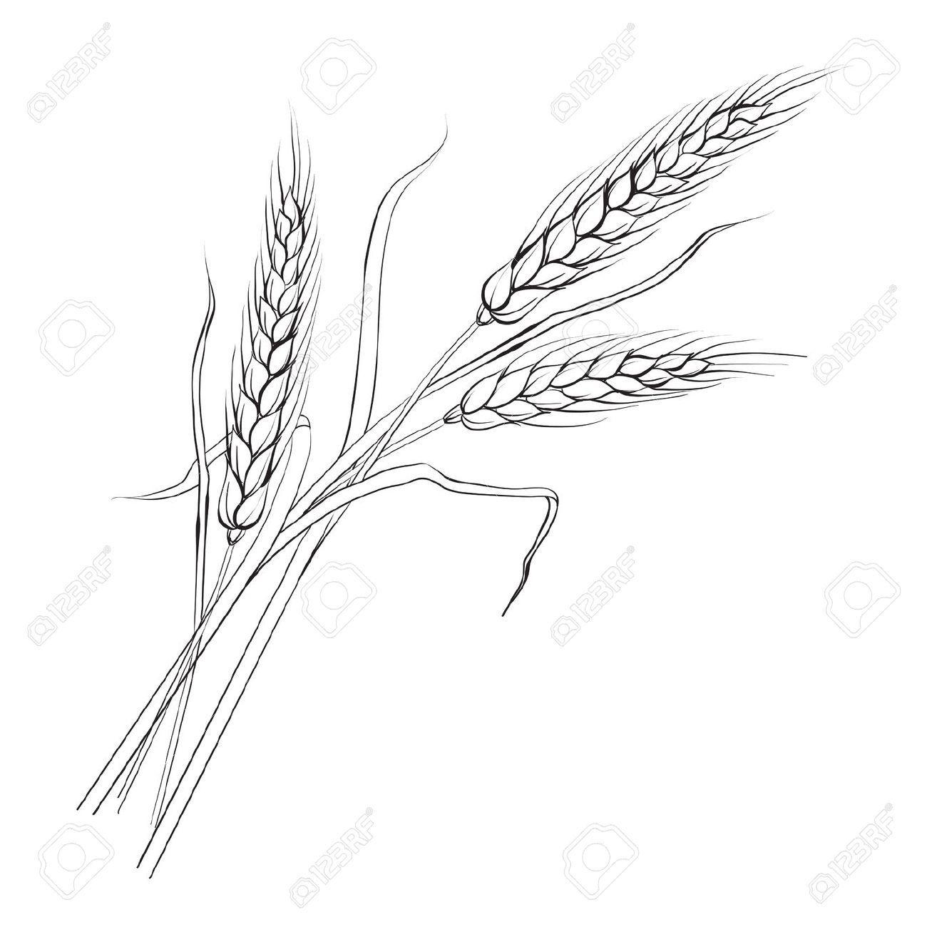 Wheat Line Drawings Google Search Art Projects Pinterest