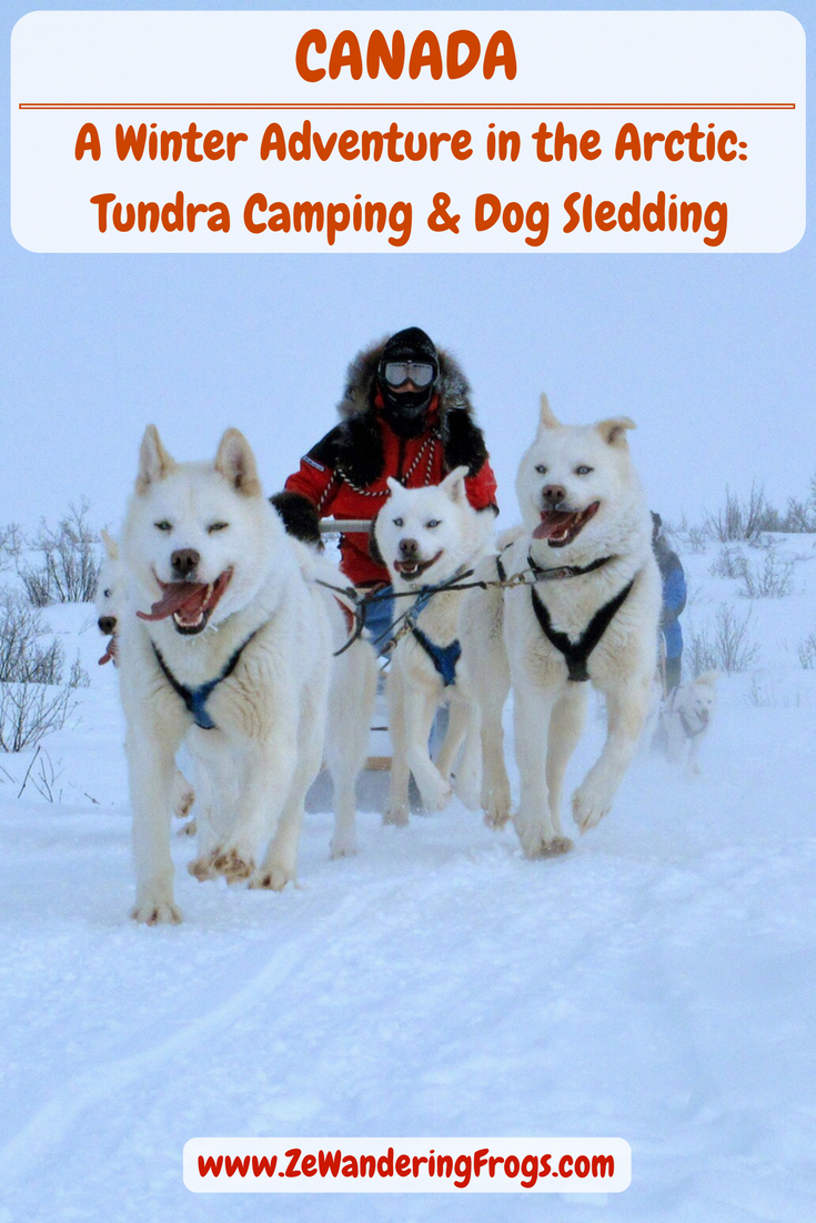 Photo of A Winter Adventure in the Arctic: Tundra Camping & Dog Sledding – Ze Wandering Frogs