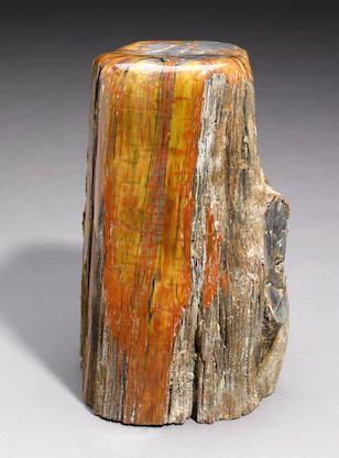 Bonhams : The Cabinet Of Natural Curiosities: Natural History