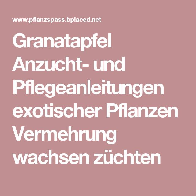 Granatapfel Anzucht  Und Pflegeanleitungen Exotischer Pflanzen Vermehrung  Wachsen Züchten
