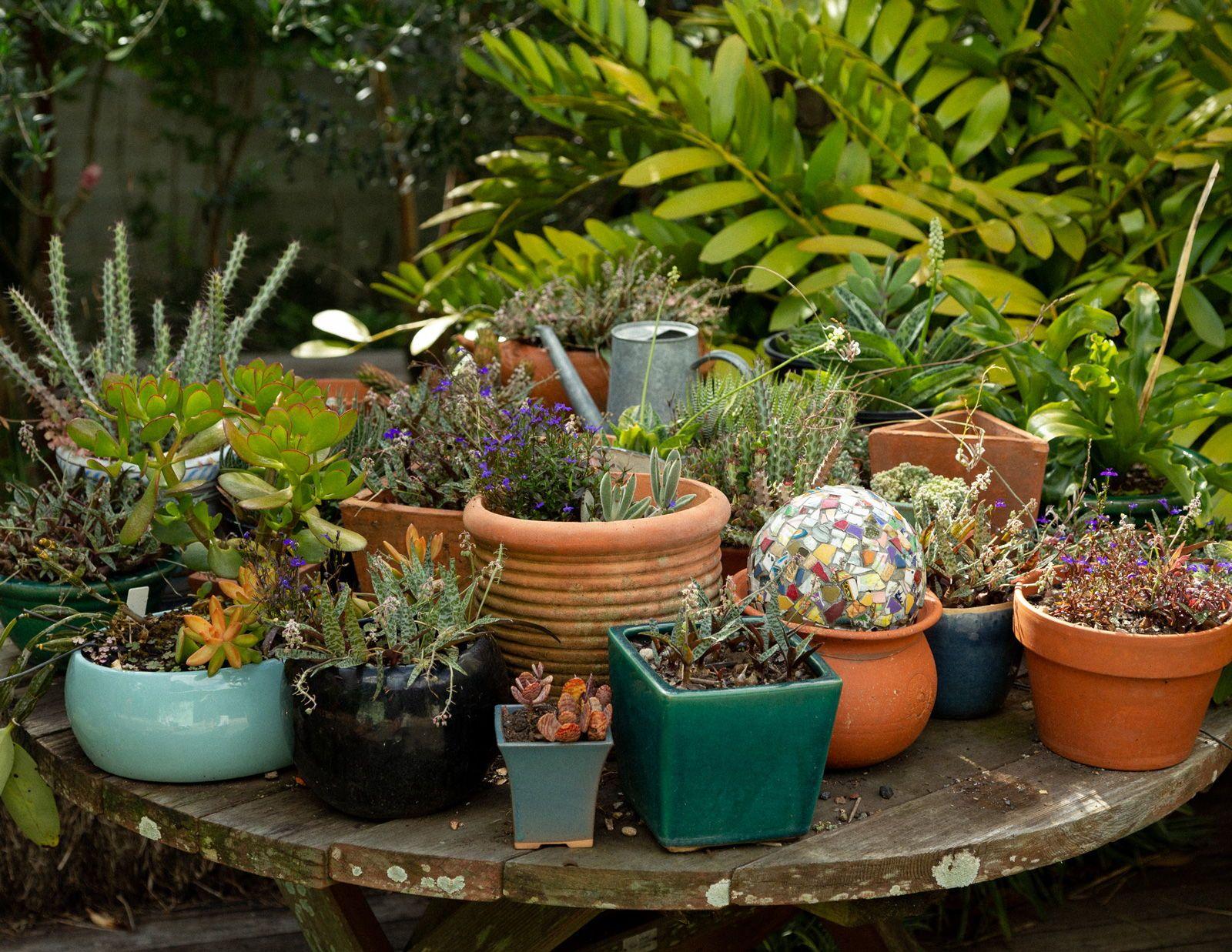 Sharon Pie S Garden Compound Gardens Australian