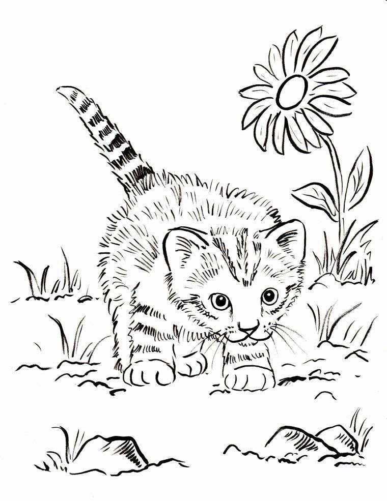 Kitty Cat Coloring Page Beautiful Kitten Coloring Pages Best