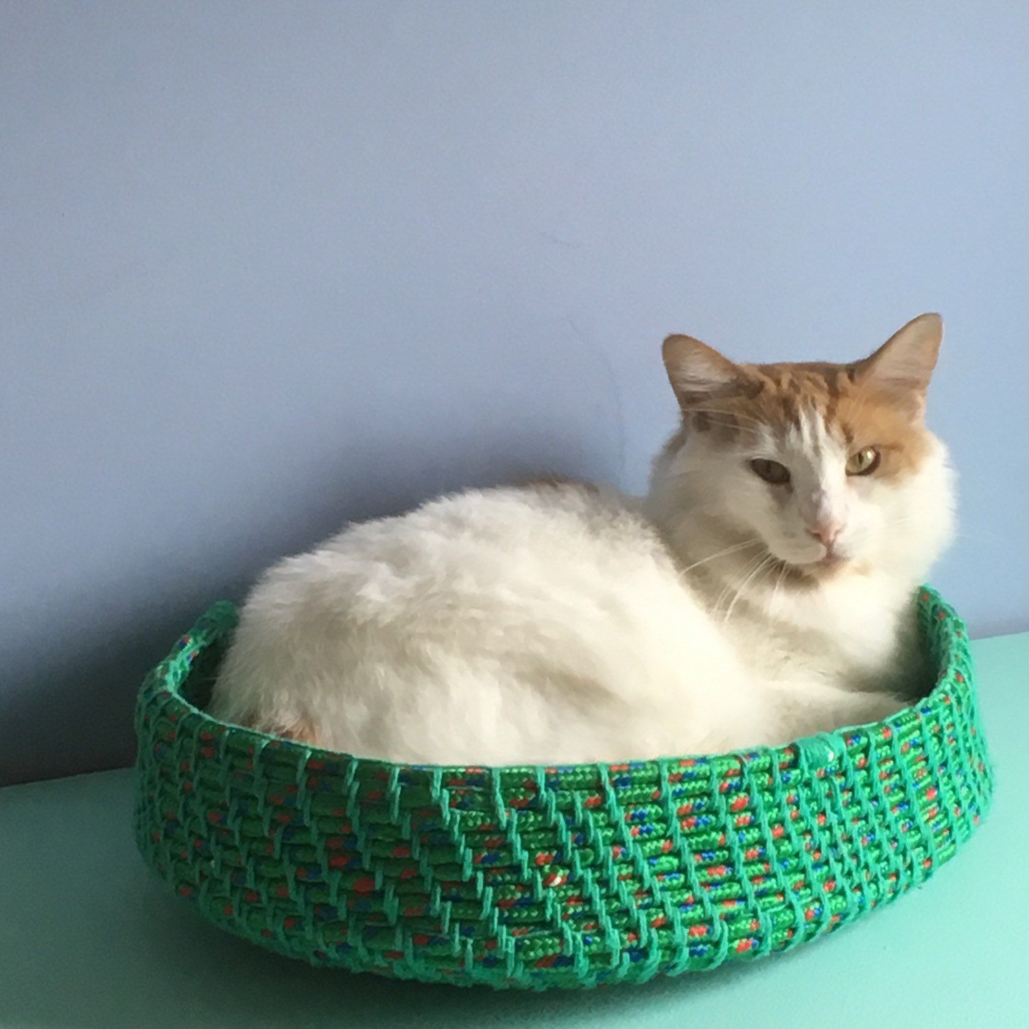 HorsePoweredLasers shared a new photo on Cat bed, Unique