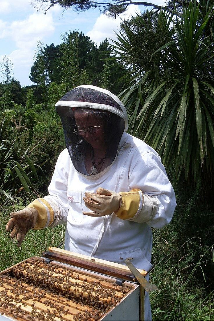 beekeeping 101 seven steps to becoming a beekeeper world the
