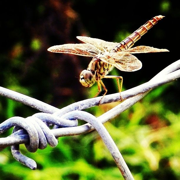 Itap Of A Dragonfly Photo Background Editor Wallpaper Photohd
