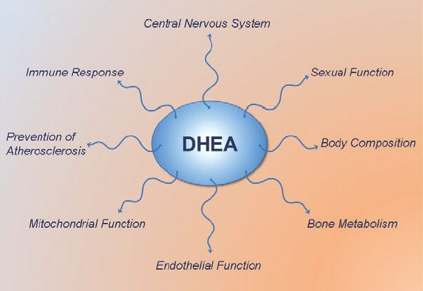 10 Tips To Boost Dhea Levels For Healthy Skin And Hormones Dhea Low Estrogen Symptoms Adrenal Dysfunction