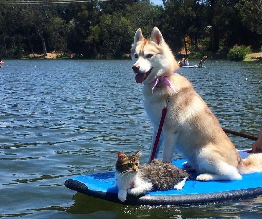 Heartbroken Kitten Wouldn T Even Eat Until She Met This Dog