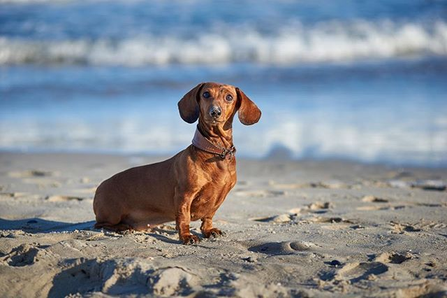 Beach Dog Puppies Cute Puppy Pictures Dogs Dogs Puppies