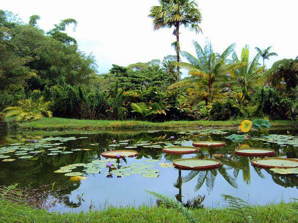 Rainforest On The Big Island: The Pana'ewa Rainforest Zoo And Gardens #Hawaii