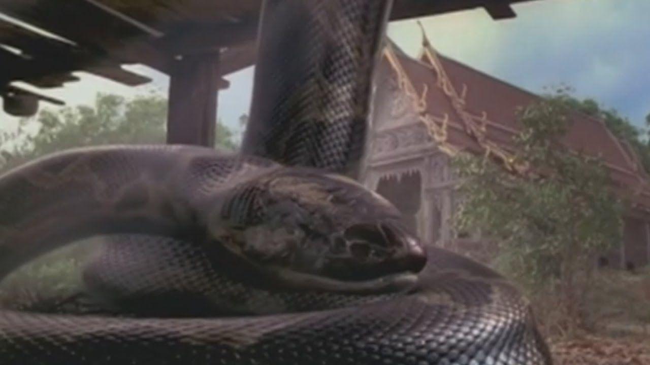 Anaconda Telugu Full Movie || Part 2/2 || Hollywood Dubbed Movies