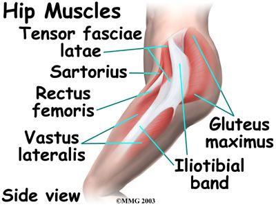 Hip Anatomy Pictures Hip Anatomy Eorthopod Anatomy Of Hip
