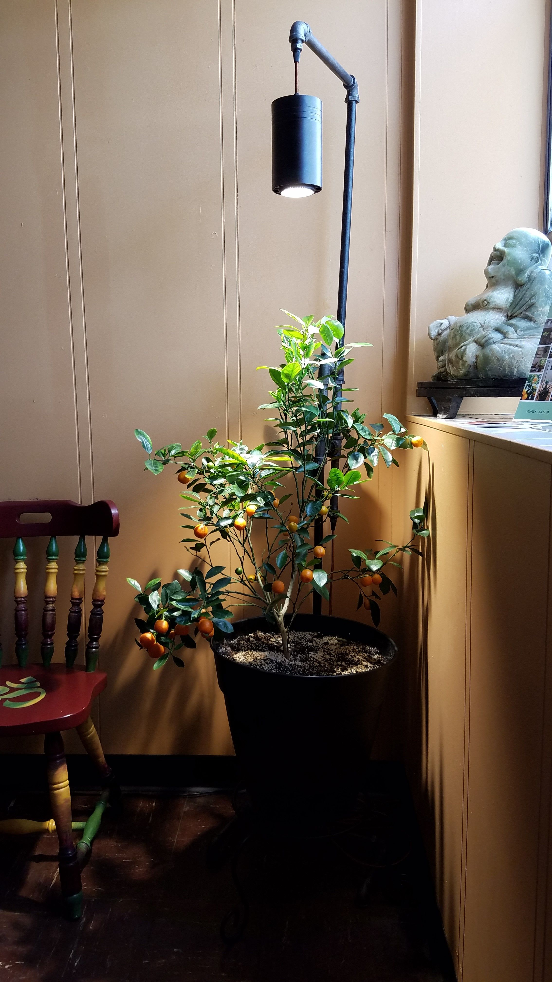 Fresh Fruit In Your Home Grow Your Own Calamondin Orange Tree In The Comfort And Security Of Your Home With Th Indoor Plant Lights Grow Lights Plant Lighting