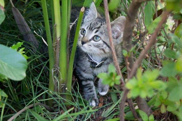 He Hunter | Cutest Paw