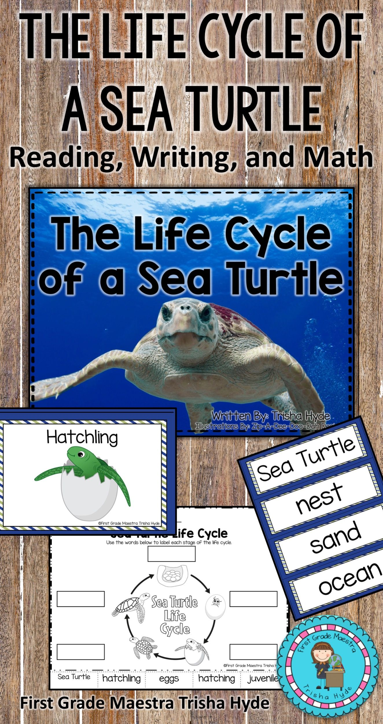 This Is A Life Cycle Of A Sea Turtle Mini Unit Included