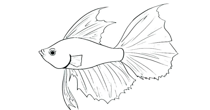 Betta Fish Coloring Pages Best Coloring Pages For Kids Animal Coloring Pages Fish Coloring Page Fox Coloring Page