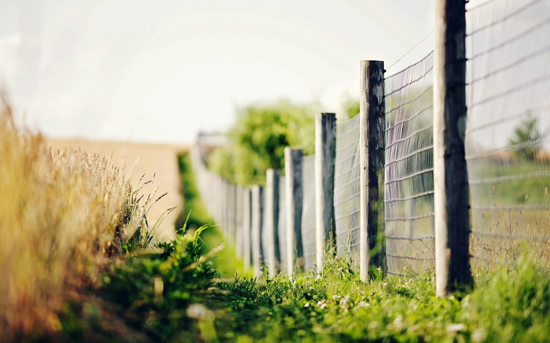 close up fence fence fencing bokeh lights blur night night bokeh