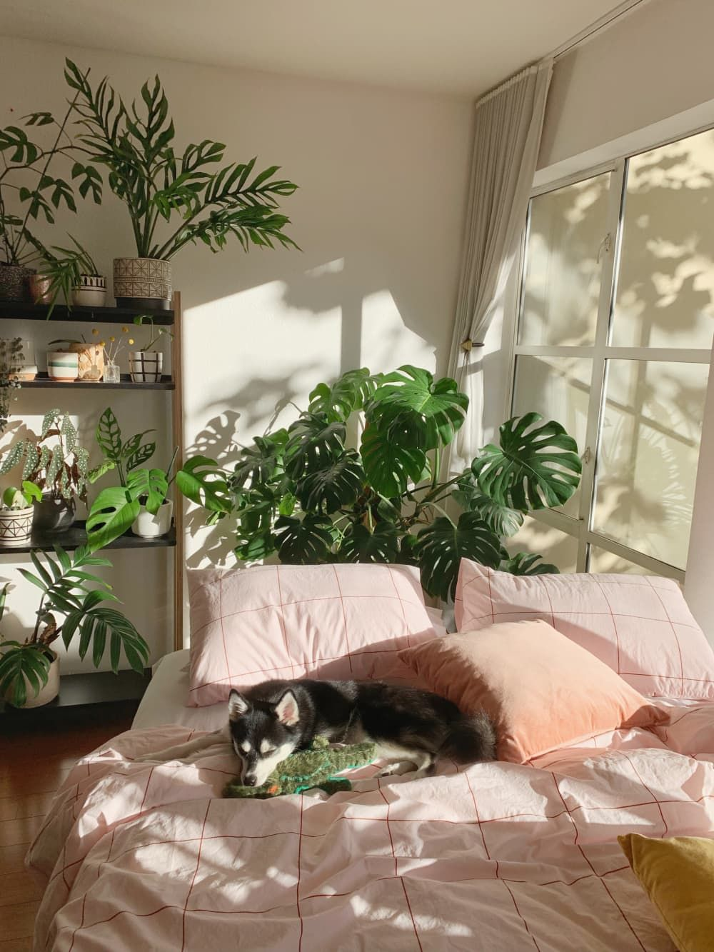 Photo of It's Impossible to Decide What's Better in This Sunny SF Apartment: the Pretty Plants or Adorable Dog