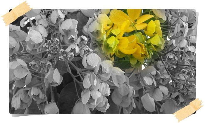Colocar mais cores no seu jardim as vezes é bom..