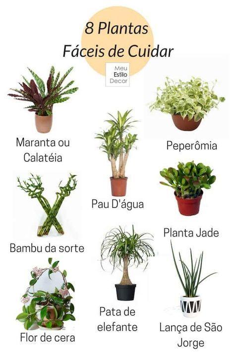 8 Plantas Fáceis de Cuidar