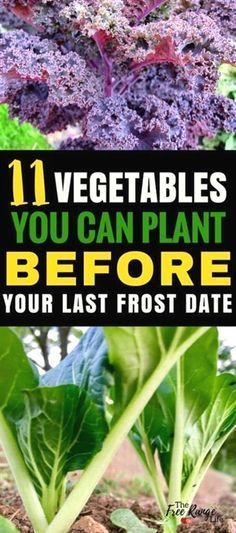 Vegetables You Can Plant BEFORE the Last Frost Vegetable Gardening Ideas: Start your garden now with these 11 cool weather crops you can grow before your last frost date! Gardening for Beginners | Orgnaic Gardening TipsVegetable Gardening Ideas: Start your garden now with these 11 cool weather crops you can grow before your last frost date! Gardening ...