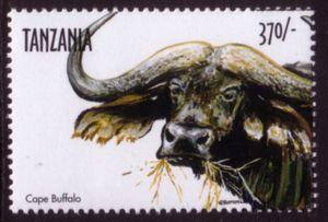 Cape Buffalo (Syncerus caffer caffer)