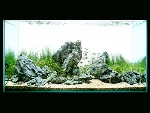 Film Takashi Amano Aquarium Aquascaping Aquascape Design Aquascape Aquascape Aquarium