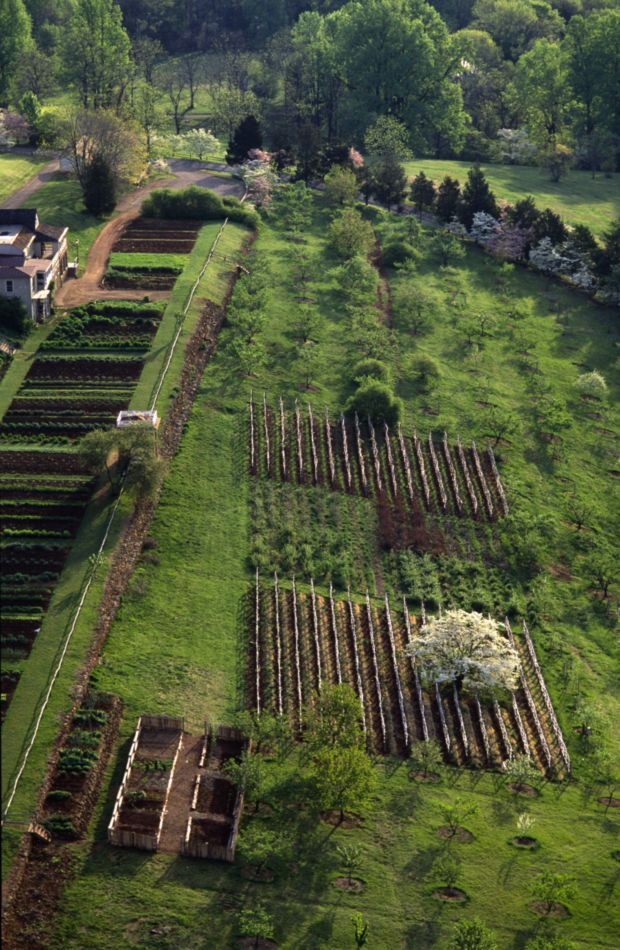 Charmant Aerial Of The South Orchard, Vegetable Garden, And Vineyards At The Monticello  Gardens // Great Gardens U0026 Ideas //