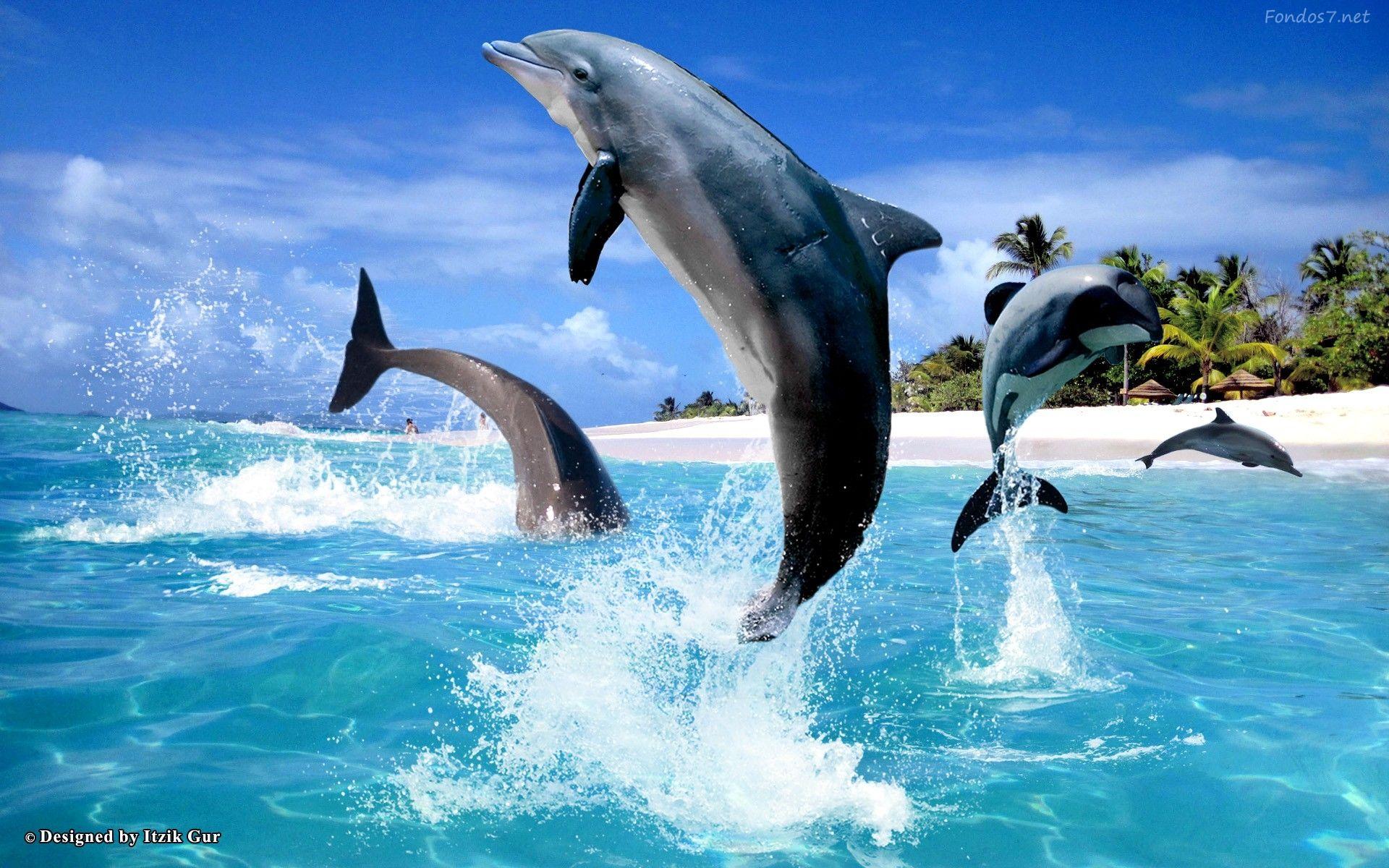 Fondos De Pantalla Del Mar: Descargar Fondos De Pantalla Delfines Saltando En El Mar