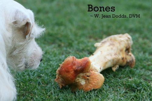 Dr. Jean Dodds' Pet Health Resource Blog | Bones