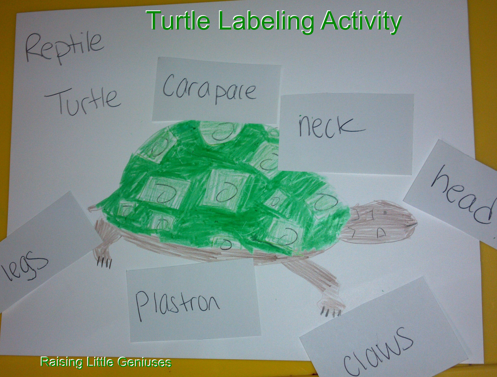 Turtle Labeling Activity Teach Your Little One The Parts Of A Turtle With This Montessori