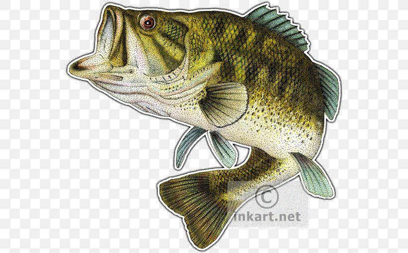 Google Image Result For Https Img Favpng Com 1 6 2 Largemouth Bass Smallmouth Bass Fish Png Favpng Hswnwk7dzhm2v Largemouth Bass Smallmouth Bass Bass Fishing