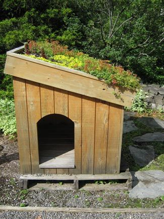 green roof dog house with rooftop garden greenroof doghouse rh pinterest com