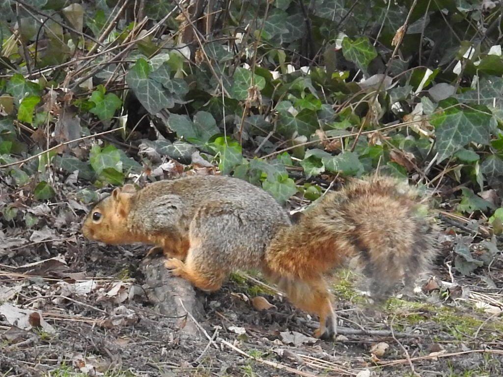 Photo taken by rhoda ellen stevens bounds squirrels