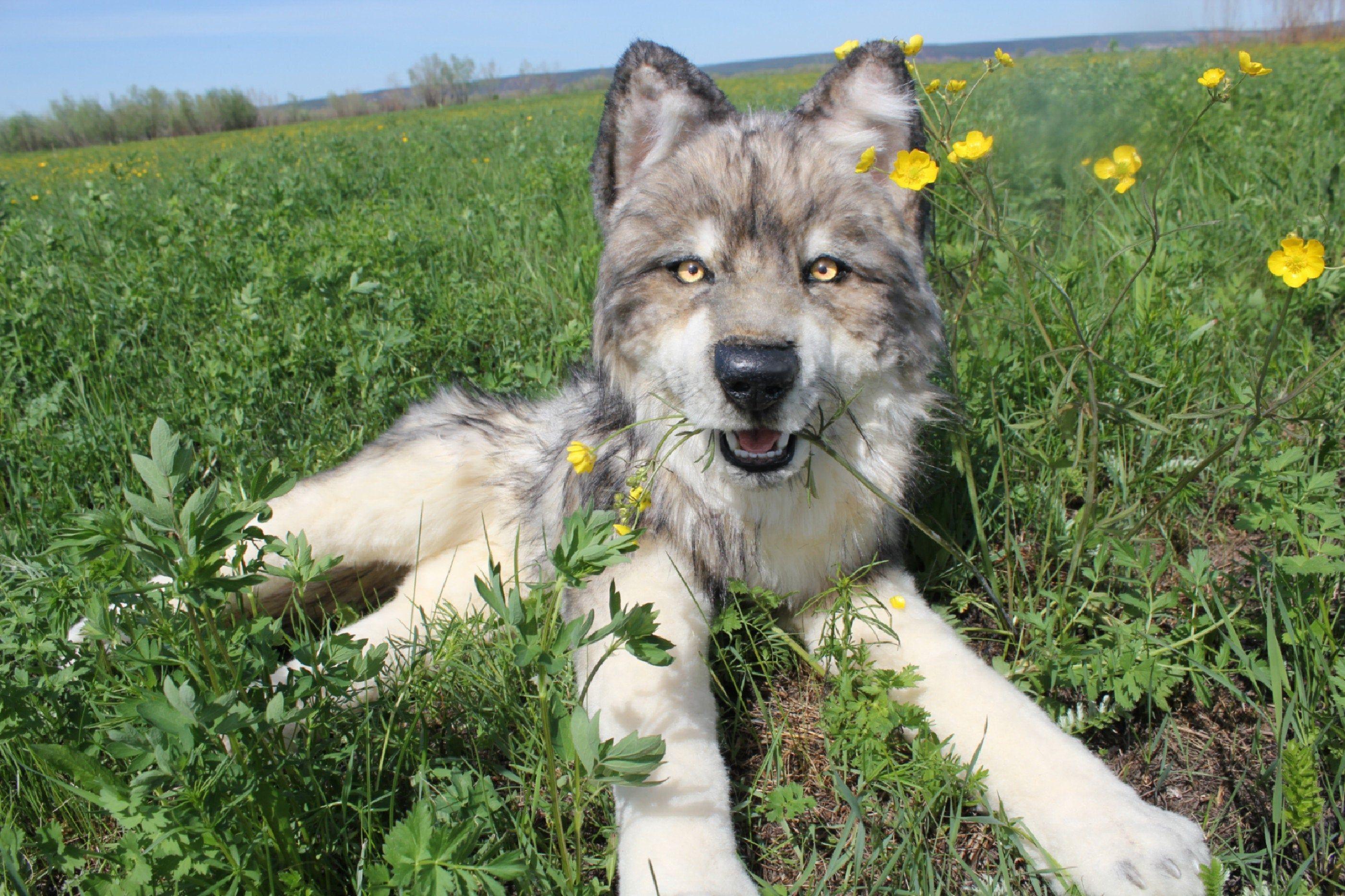 Realistic toy Wolf. Plush toy Животные, Малыши, Игрушки
