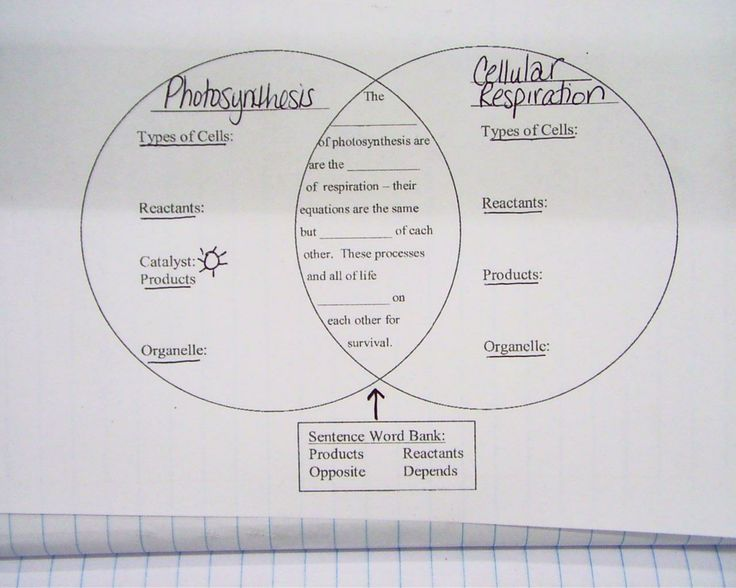 Photosynthesis and respiration venn diagram answers online cellular respiration diagram worksheet 100 101 cellular rh pinterest com cellular respiration photosynthesis and cellular respiration ccuart Image collections