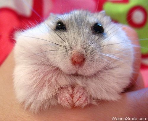 I Can Tell You A Fortune Maybe Mit Bildern Susse Tiere Lustige Hamster Hamster