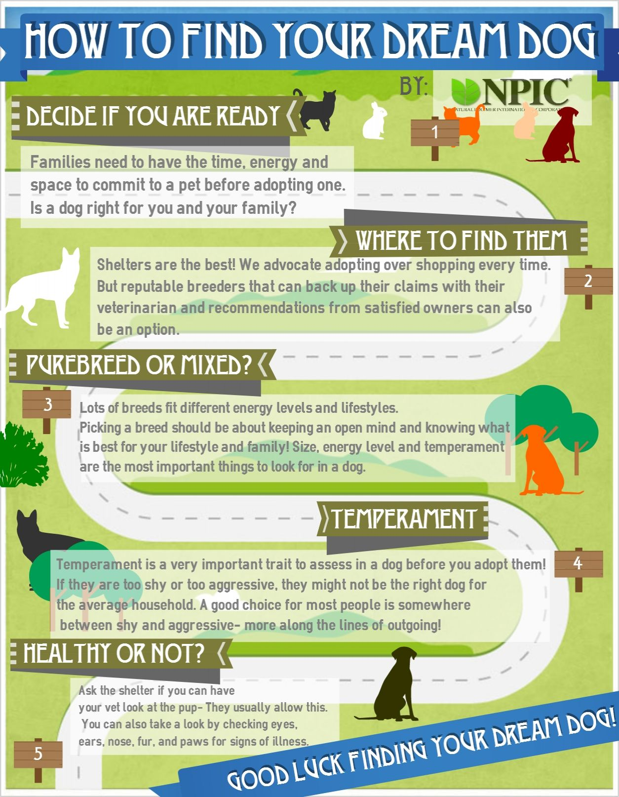 How to Find Your Dream Dog NPIC Finding yourself, Pets