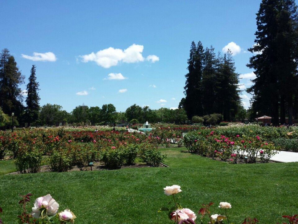 San Jose Municipal Rose Garden San Jose California East San Jose San