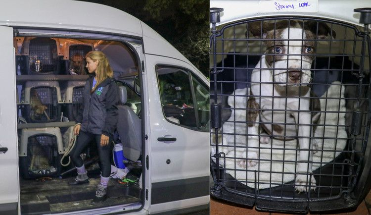 Community Bands Together To Save Broken Down Van Carrying 50 Hurricane Florence Rescue Pets People Animal Rescue Pets Chihuahua