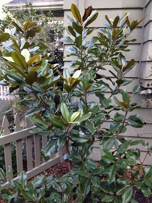 Ten Trees And Shrubs For A Small City Garden Cuh Triangle Bed