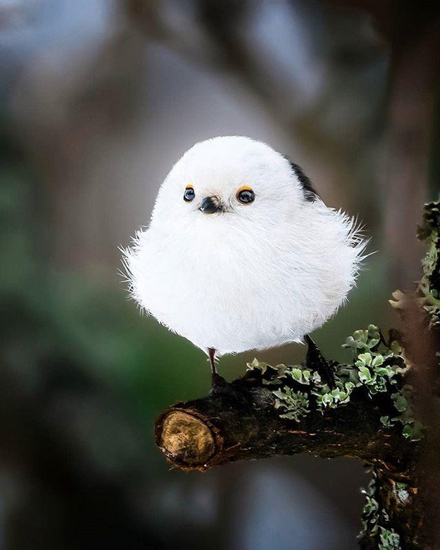 Картинки смешные птичек, девушки машине открытки