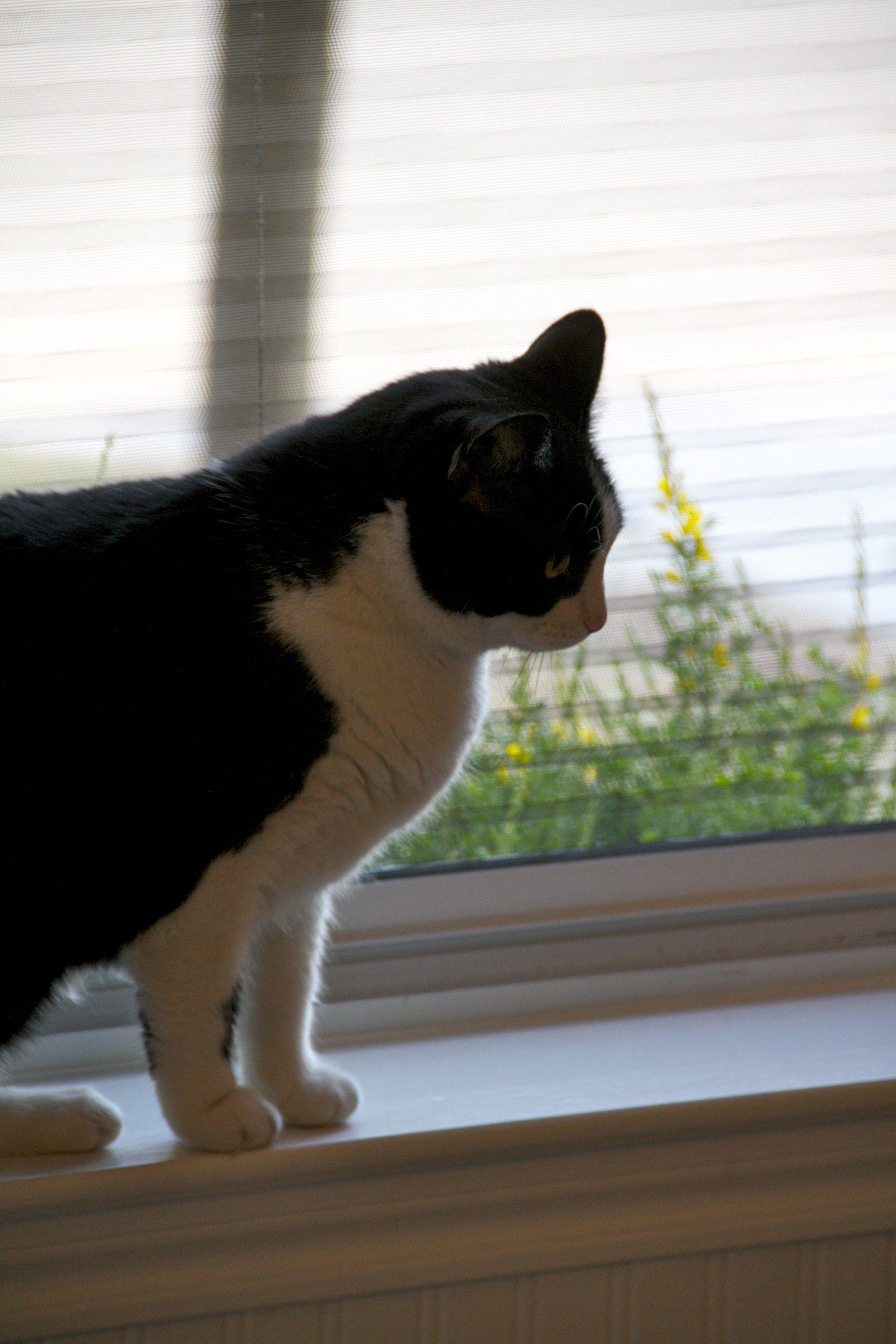 Cats Retractable Screens