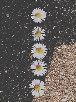 Photography Tumblr Hipster Vintage Indie Night Flower Flowers Pink Artsy Photos Tumblr Photography Tumblr Wallpaper