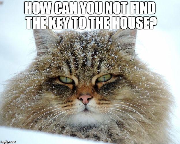 Funny Cat Meme Pictures : Directions for making lasagna cat meme