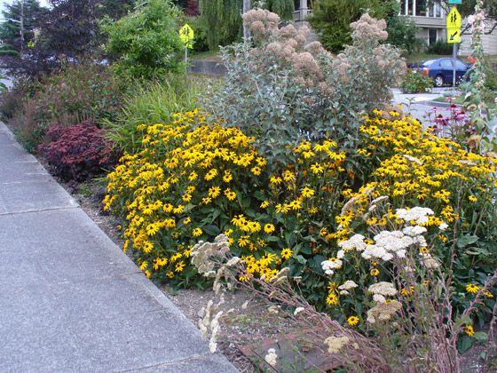 Drought Resistant Landscaping Drought Tolerant Parking Strip Landscape Design In Seattle Wa A Xeriscape Landscaping Sustainable Landscaping Shade Garden